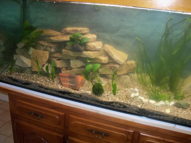 et de .... evolution d'un bac jusqu'a la fish room !! - Page 12 100_2828