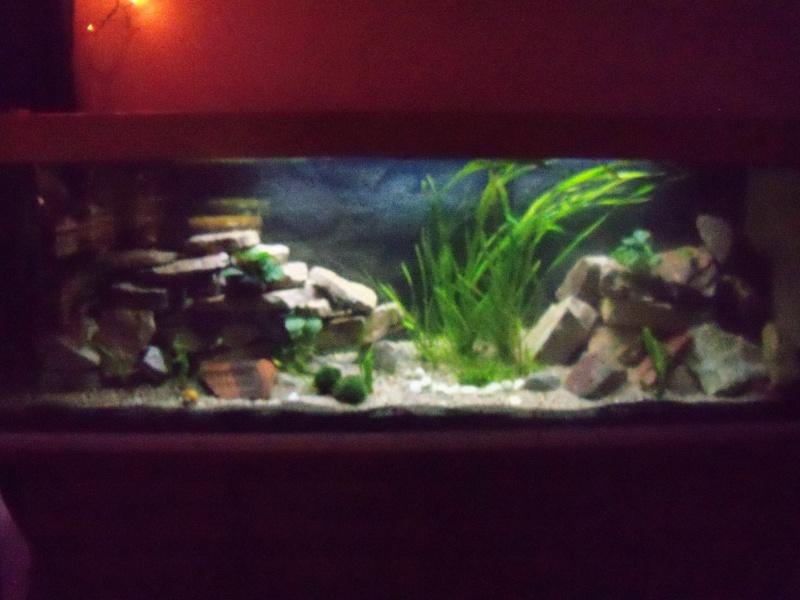 et de .... evolution d'un bac jusqu'a la fish room !! - Page 12 100_2911