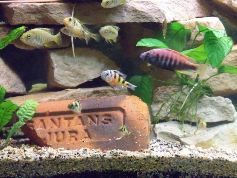 et de .... evolution d'un bac jusqu'a la fish room !! - Page 14 100_3411