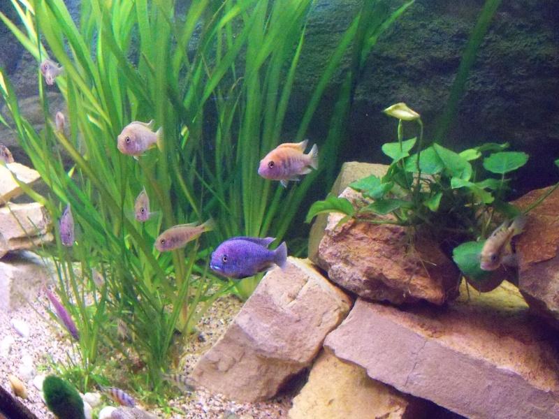 et de .... evolution d'un bac jusqu'a la fish room !! - Page 14 100_3414