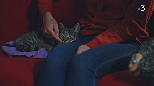 Les animaux dans PBLV - Page 4 Chat110