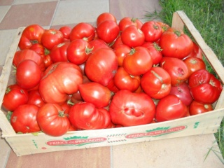 Venez lancer des fleurs ou des tomates aux acteurs - Page 29 Sdc12310