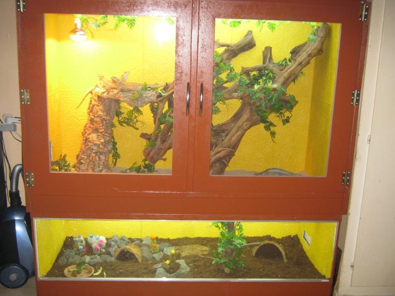 le terra de mes pogo ( et tortue )  Img_0110