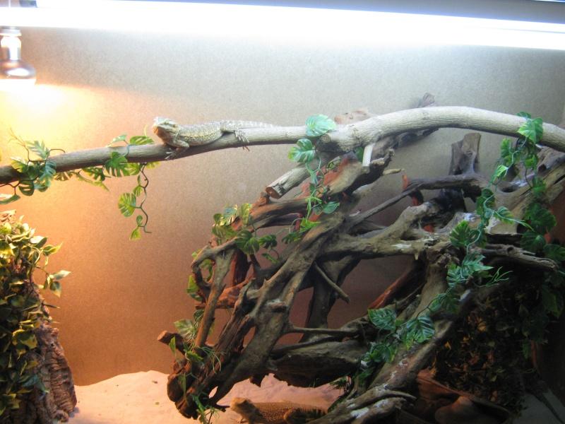 le terra de mes pogo ( et tortue )  Img_0913