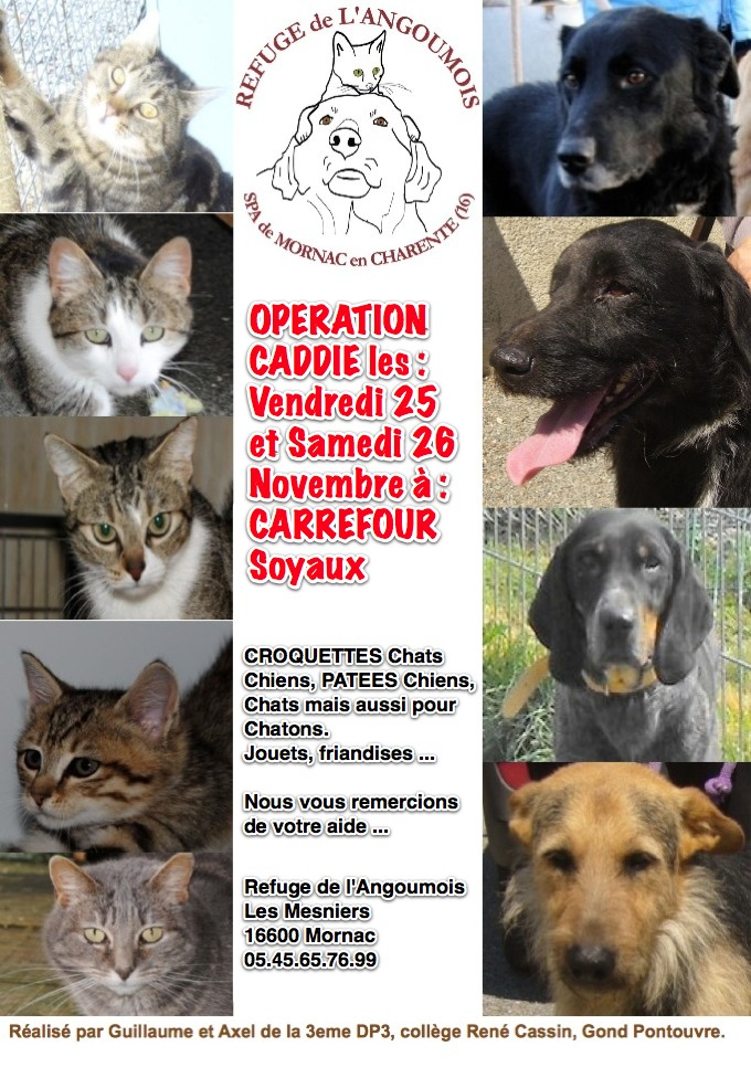 Opération caddies du 25 et 26 Novembre ANNULEE !!!!! Caddie10