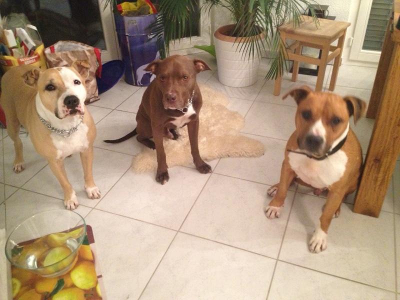 Nouvelles des chiens partis le 1er décembre pour l'Allemagne Foto110