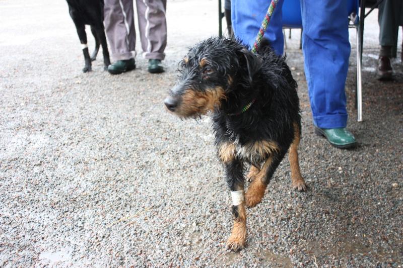 DOODIE Jagd Terrier noire et feu 250269802036900 Img_1620