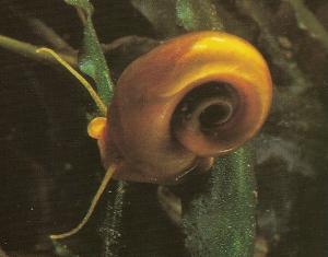 Les Algues et les Escargots Planor10