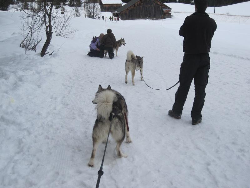Reportage: Un homme et ses chiens de traîneau... Img_1313