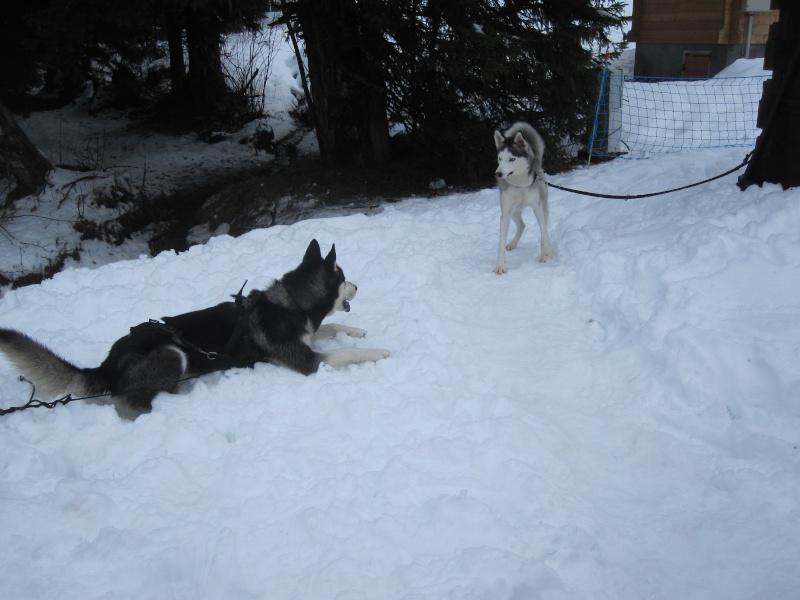 Reportage: Un homme et ses chiens de traîneau... Img_1316