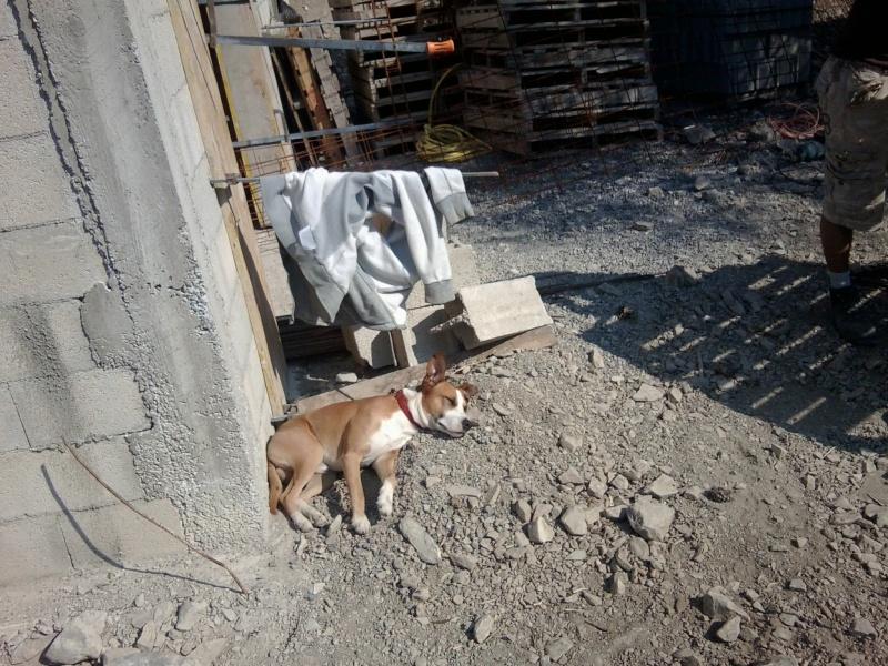 Laisser un chiot/chien seul pendant 10h ou pas? Photo027