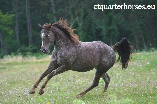 ATTRACTA REMEDYS appaloosa mare  - Page 2 53976910