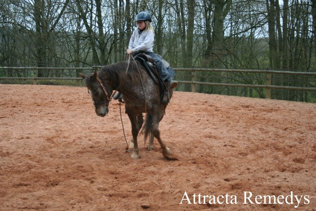 ATTRACTA REMEDYS appaloosa mare  54021910