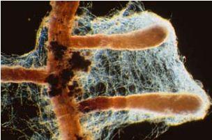 Et si les champignons étaient bénéfiques à nos plantes? Captur23