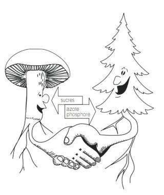 Et si les champignons étaient bénéfiques à nos plantes? Captur25