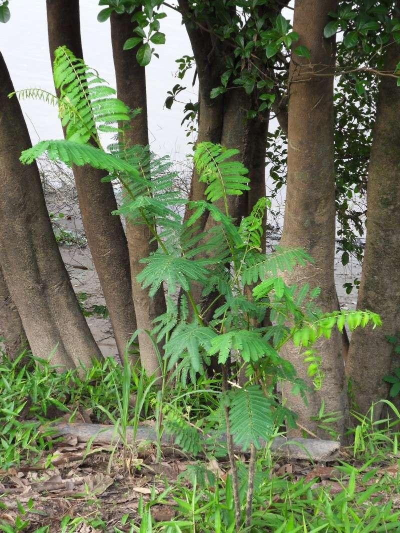 Une plante sensitive mais laquelle ? Sdc14423