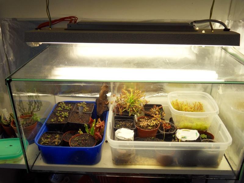 Projet terrarium dans une étagère Sdc15612