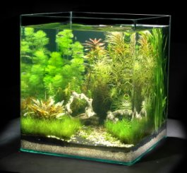 Un aquarium pour noël Th_nan10