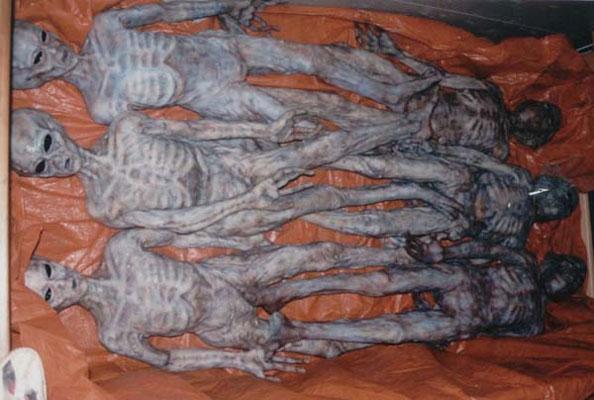 Desclasifican Fotos De 6 Cadáveres Alien Galact11
