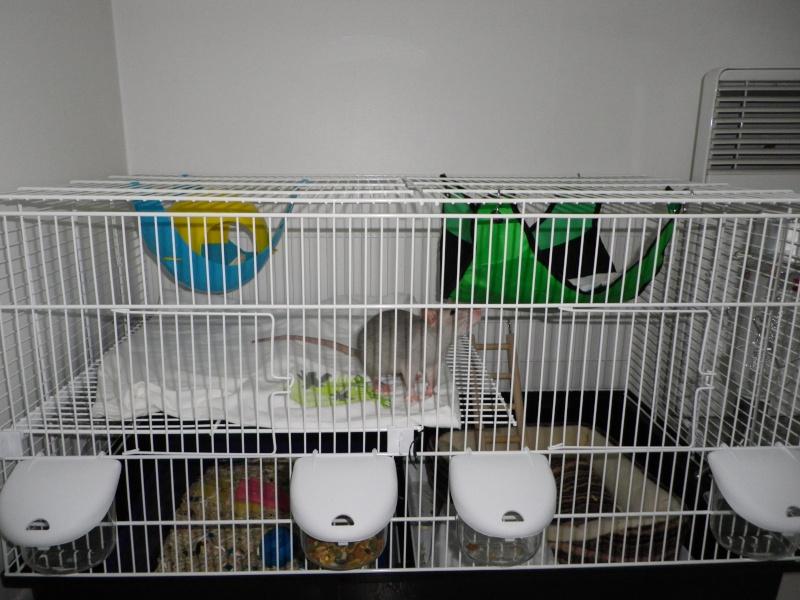 Photos de vos cages - Page 21 Aah_0310