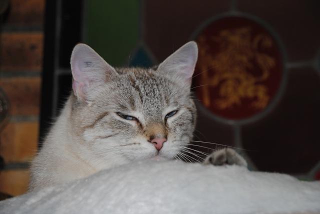 Photos des chats sauvés, avant/après Dsc_2040
