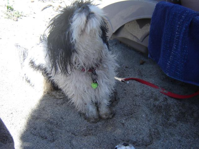 Monsieur Jules à la plage  06910