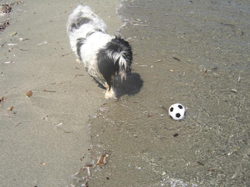 Monsieur Jules à la plage  16810
