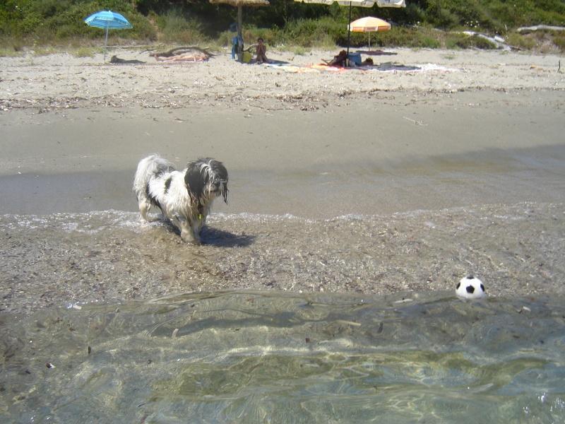 Monsieur Jules à la plage  16910