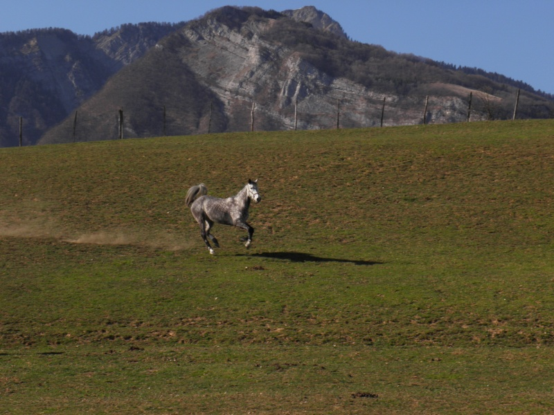 "Concours : ""cheval au galop"" GAGNANTE : TItâne - Page 2 P3170110"