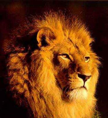 horoscope journalier  Lion11