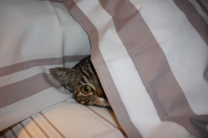 Chats, chattes, chatons et chatounettes des membres Img_1111