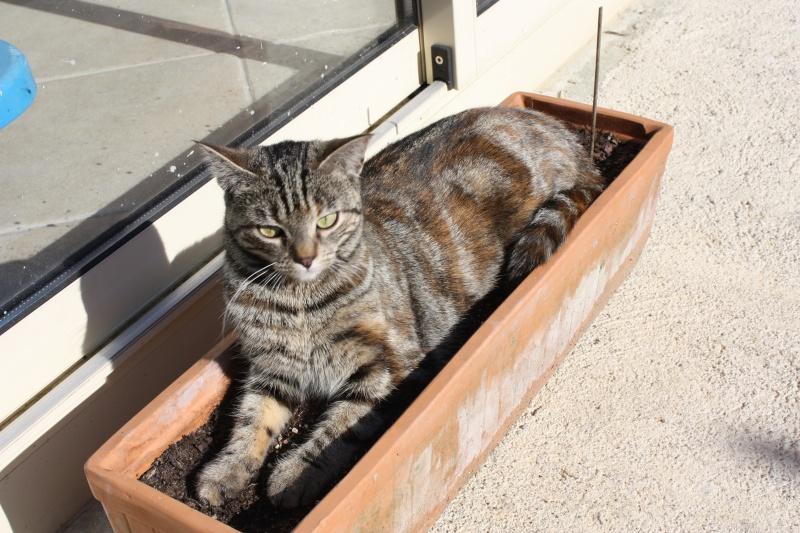 Chats, chattes, chatons et chatounettes des membres Img_1610
