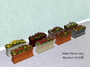 Цветы Dkj11