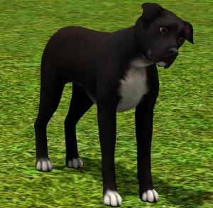 Собаки Foru1166