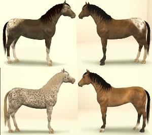 Лошади Foru1168