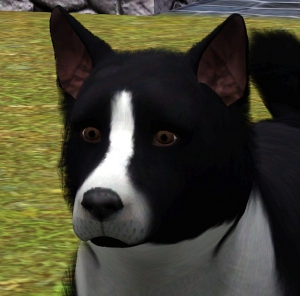 Собаки Foru1190