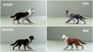 Собаки Foru1191
