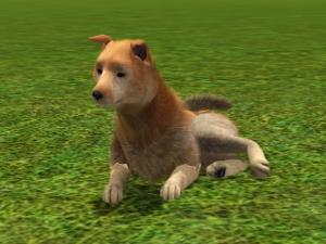 Собаки - Страница 2 Foru1316