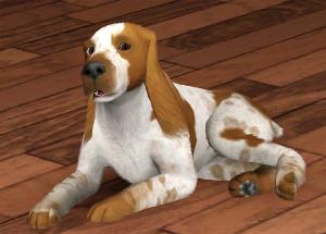 Собаки - Страница 2 Foru1390