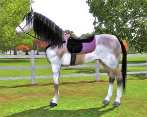 Лошади Foru1392