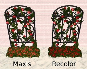 Цветы для дома - Страница 5 Foru1555