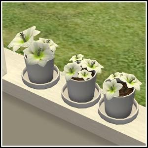 Цветы для дома - Страница 4 Mbt427