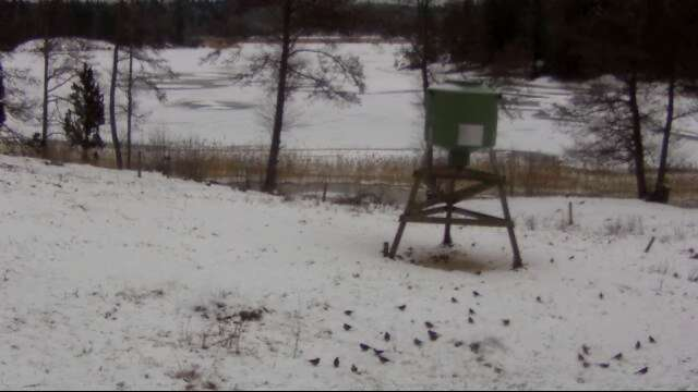Wild Pig Camera Lovers/ ADDRESS CHANGED TO SWEDISH STREAMING CAM - Page 24 2012-027