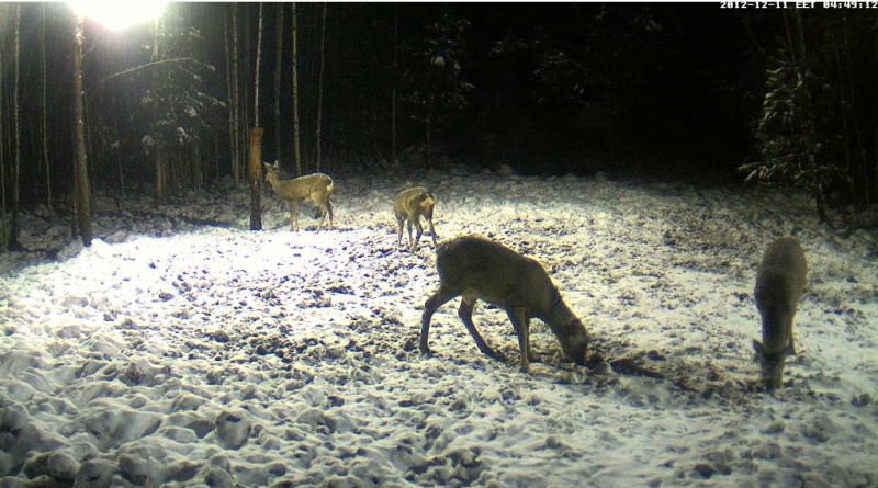 Boars cam, winter 2012 - 2013 - Page 2 2012-188