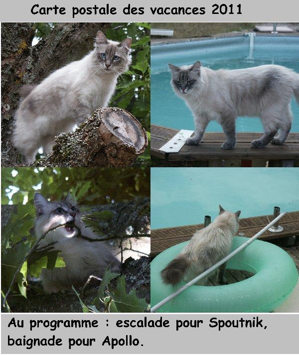 Concours photos: Le chat en vacances.... Carte_10