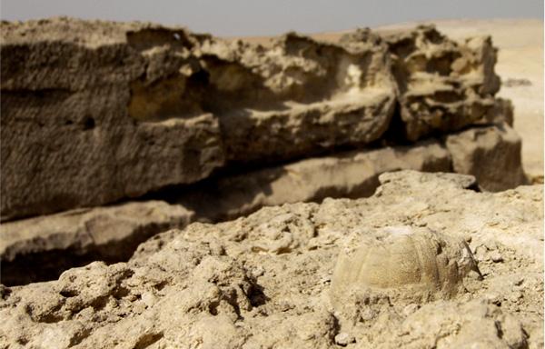 Sujet unique: Les pyramides dans le monde - Page 17 Fossil10