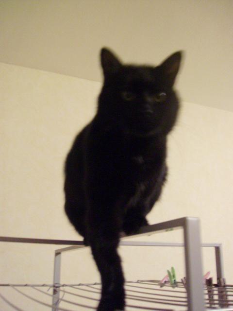 Kawa 2.5ans, handicapé...petit chat ...(presque) parfait^^ Kawa_j10