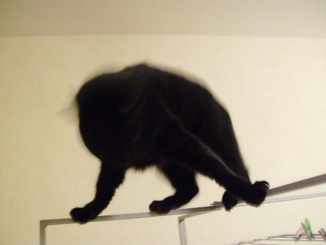 Kawa 2.5ans, handicapé...petit chat ...(presque) parfait^^ Kawa_j11