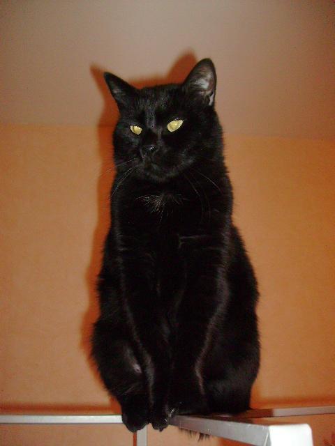 Kawa 2.5ans, handicapé...petit chat ...(presque) parfait^^ Kawa_j13