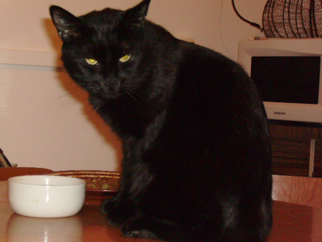 Kawa 2.5ans, handicapé...petit chat ...(presque) parfait^^ Kawa_o12